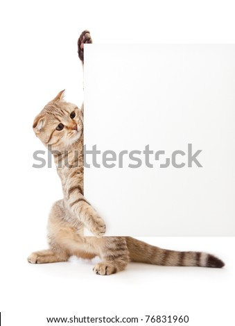 kitten isolated with placard or banner for your text