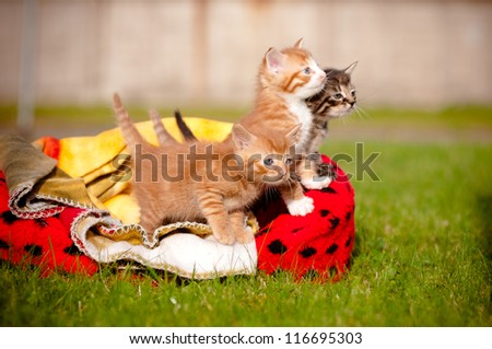 kitten litter outdoors