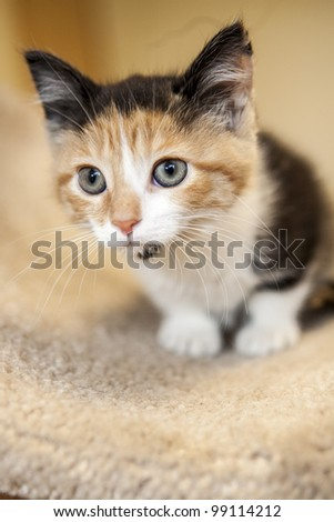 Kitten looking away from the camera