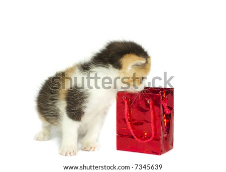 kitten looking into gift box isolated on white