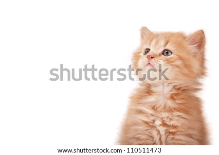 kitten looking isolated on a white background - stock photo