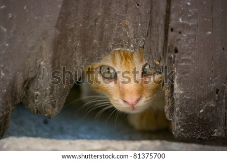Kitten looks hidden across the hole of an old door