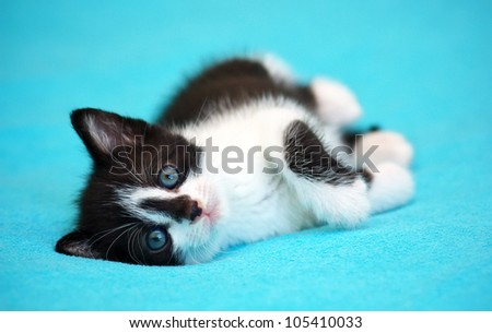 Kitten lying on the bed