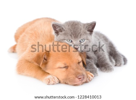 Kitten lying with sleepy puppy. isolated on white background
