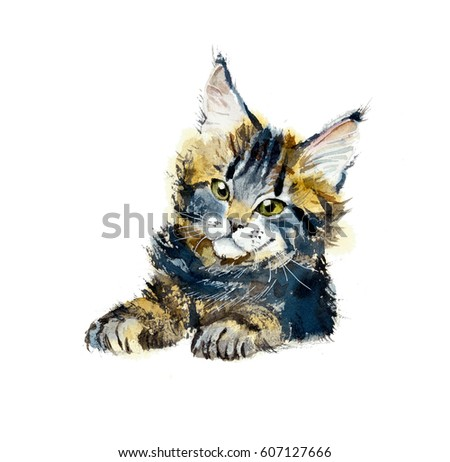 Kitten maine coon. Portrait animal. Watercolor hand drawn illustration