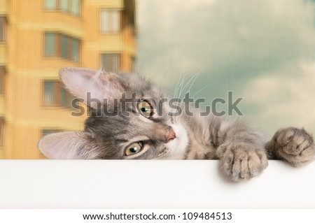 Kitten on a sill closeup