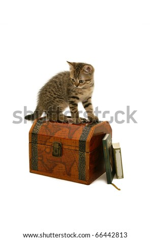 Kitten on a steamer trunk