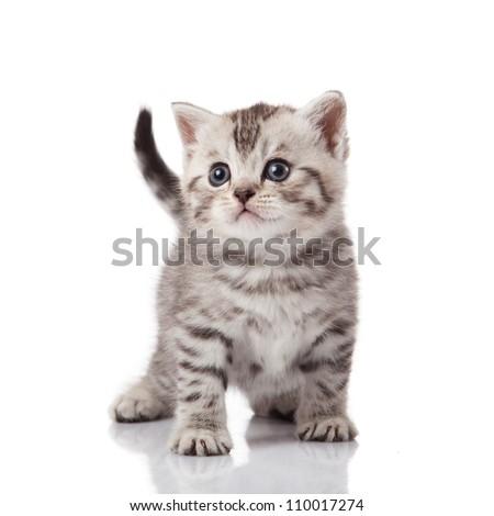 kitten on a white background - Shutterstock ID 110017274