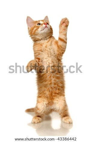 stock photo : Kitten on a white background