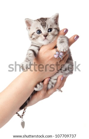 kitten on a white background. cat on a hand