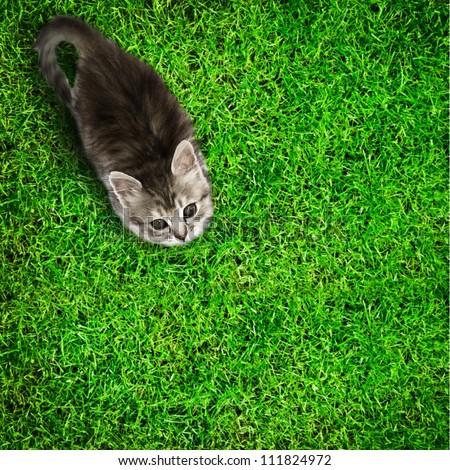 Kitten on grass background. Top view