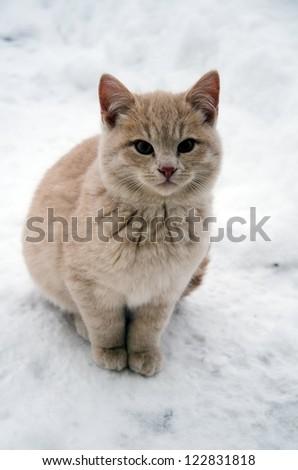 kitten on snow
