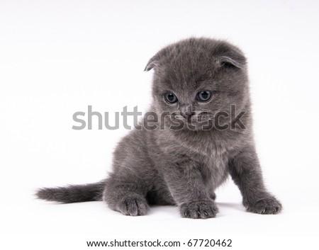 Kitten on the white isolated background - stock photo