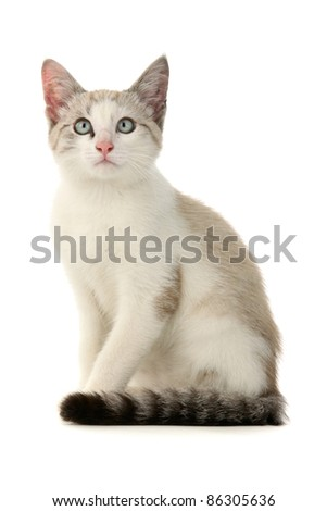 Kitten, on white background.