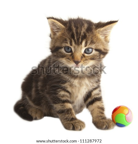 Kitten on white background playing with a ball.