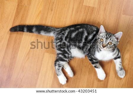 Kitten on wooden floor