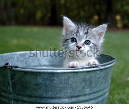 Kitten peeking out of a bucket