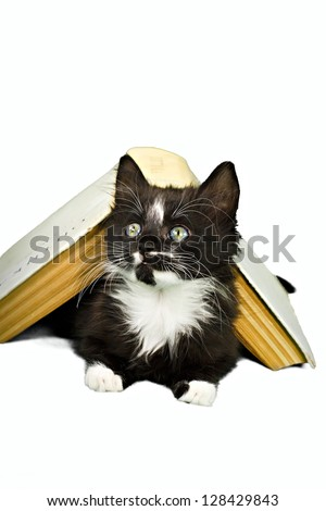 Kitten peering out from underneath book