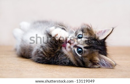 Kitten playing at the table at home and looking at photographer (series Animals)