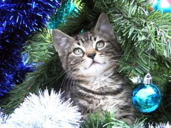 Kitten playing in a Christmas tree