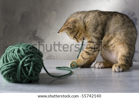 kitten playing with a green wool ball on a marble surface and gray background