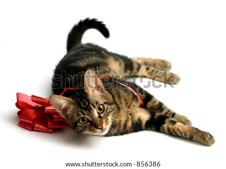 Kitten playing with a red bow