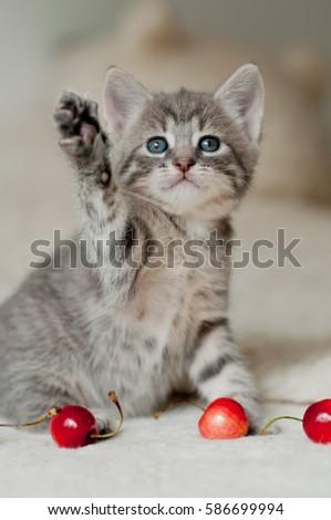 kitten playing with cherries #586699994