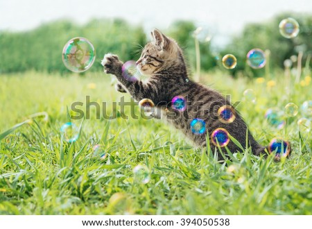 stock photo kitten playing with soap bubbles on green field in summer side view 394050538 - Каталог — Фотообои «Животные»