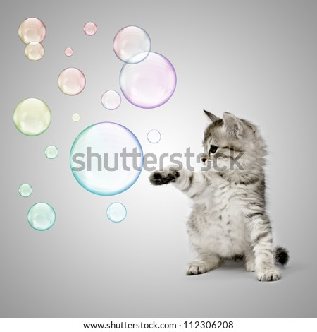 Kitten playing with soap bubbles over grey background