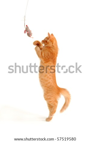 kitten playing with toy mouse isolated on white background