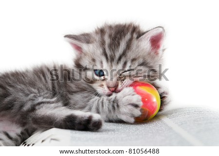 Kitten plays with a ball - Isolated on white background - stock photo