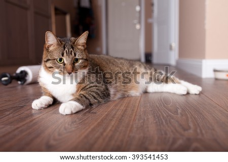 Kitten, resting cat on a flor in colorful blur background, cute funny cat close up, young playful cat at home, domestic cat, relaxing cat, cat resting, cat playing at home, elegant cat