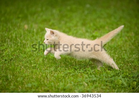 Kitten running through the grass and playing