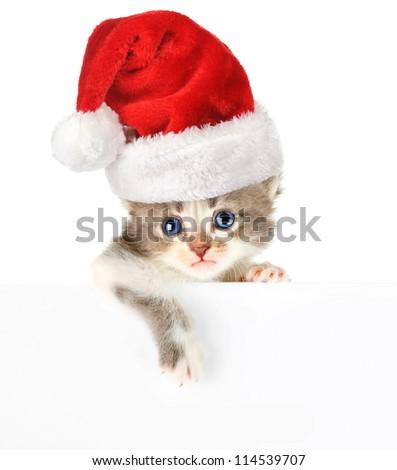 Kitten santa cap banner