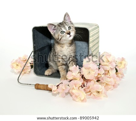 Kitten sitting in bucket with pick flowers on a white background.