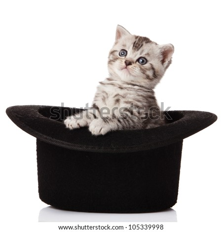 kitten sitting in hat. little kitten on white background.