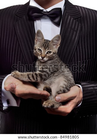 kitten sitting in men's hands