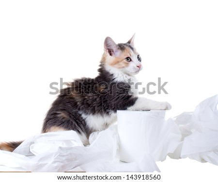 Kitten sitting in the unwound toilet paper