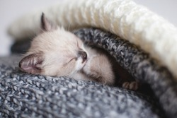 Kitten sleep in knitted plaid. Little cut cat at home