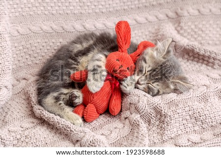Kitten sleep on cozy blanket hug toy easter bunny. Fluffy tabby kitten snoozing comfortably with plush rabbit hare on knitted pink bed. Cat sweet dreams.