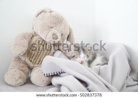 Kitten sleeping next to his teddy bear Stok fotoğraf ©