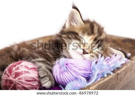 kitten sleeping resting in a basket of balls of yarn