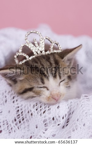 kitten sleeping with princess crown