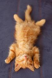 kitten sleeps on the back like a log on sofa