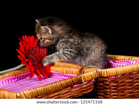 Kitten smelling at a red flower while sitting in a small basket