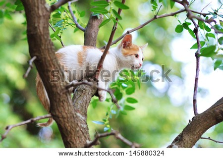 Kitten stuck on a tree