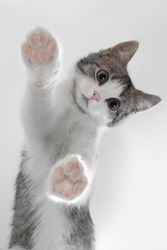 kitten through the glass. stands on its paws. Paws are frontal as on emoji. touches the glass. kitten from below friend man, kitten leaned on the screen for design. on a gray background