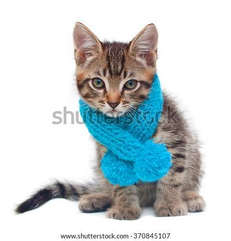 Kitten wearing a scarf
