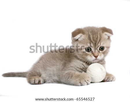 Kitten with a ball of yarn.