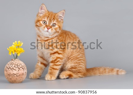 Kitten with a flower on grey background